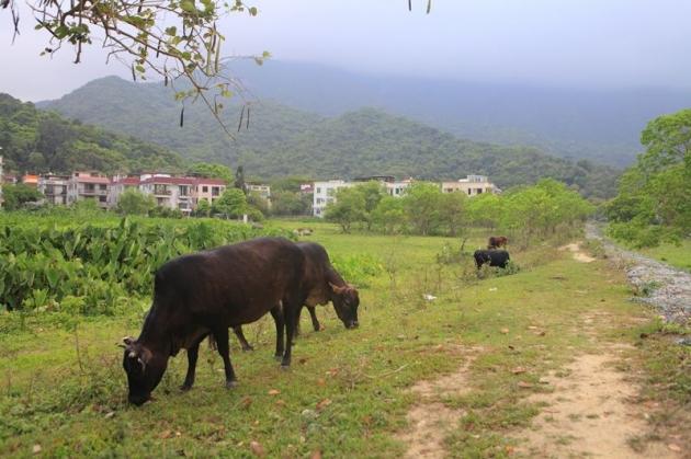 尋覓四分之三香港~郊野行山、穿村、攝影、米芝蓮美食5日 10